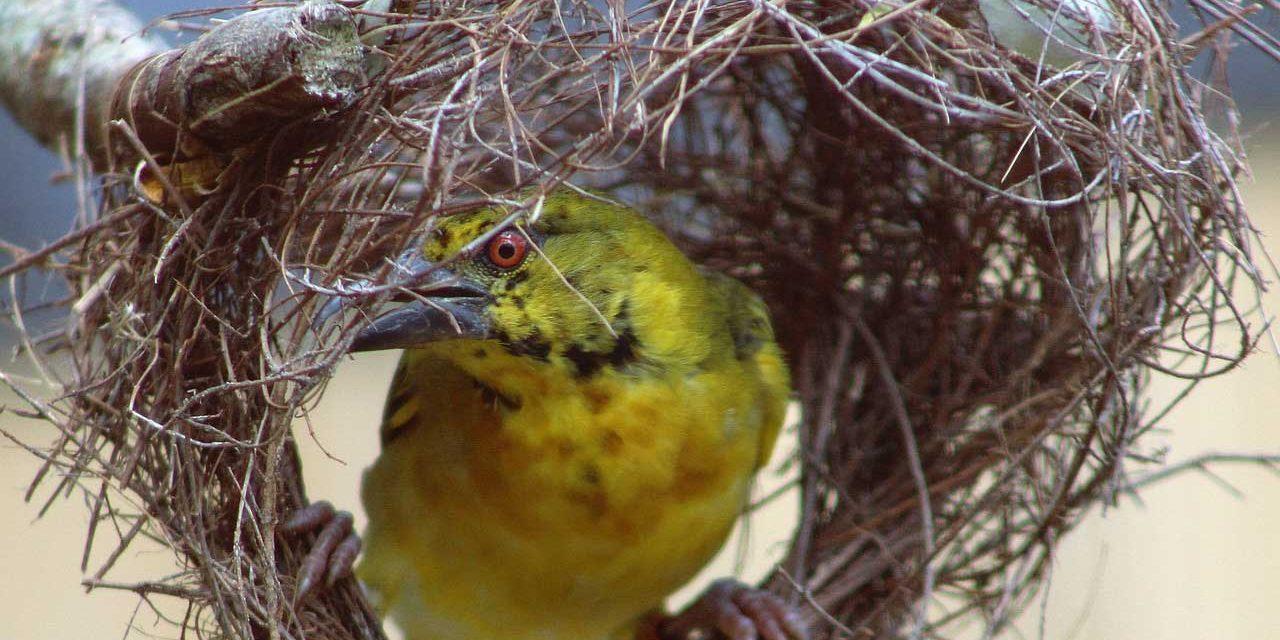 Envy the Birds – Matthew 8:14-27