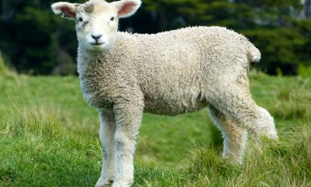 The Lord is my Shepherd–Psalm 23