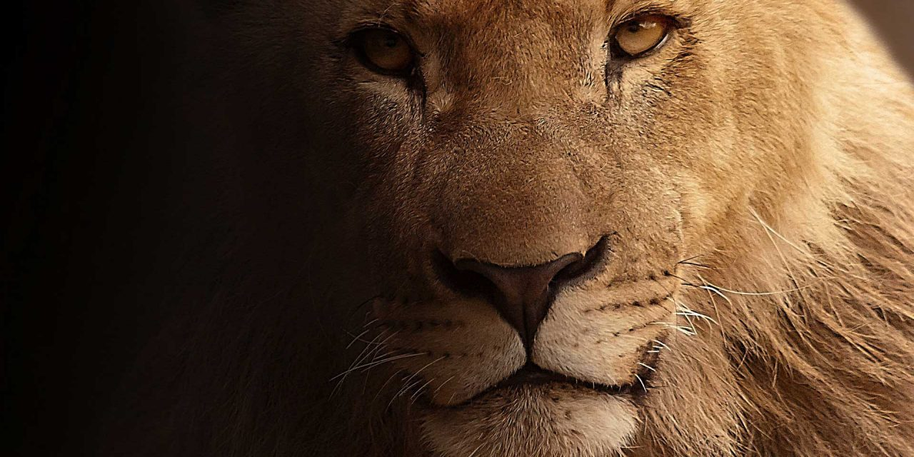 Fierce Confidence – 1 Sam 17:37