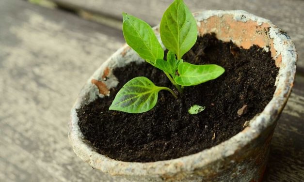 A Time to Plant and A Time to Uproot – Ecc 3:2