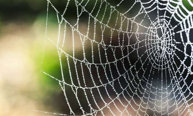 Web of Support – Eph 6:18