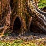 Rooting Deeper