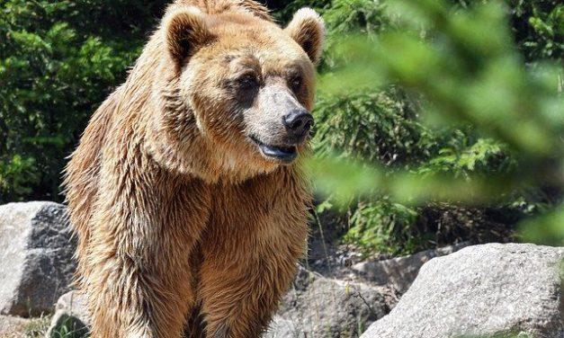 The Bears Mauling Youth? – 2 Kings 2