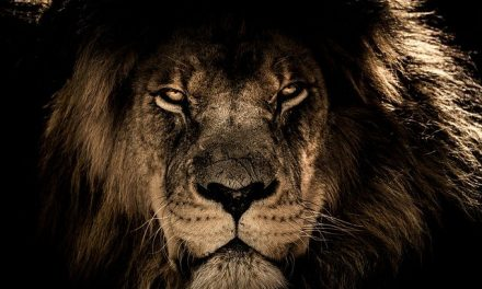 Finally…a King with Courage to Believe God – 2 Kings 18